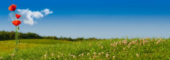 Entretenir Vos Espaces Verts Et Zones Naturelles Nous Mettons En Place Un Paturage Extensif Dherbivores La Presence De Nos Especes Permet Entretien
